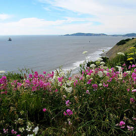 Wild Flowers Along The Coast by Rebecca Renfro
