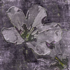 Wild Geraniums Go 3-D by Mother Nature