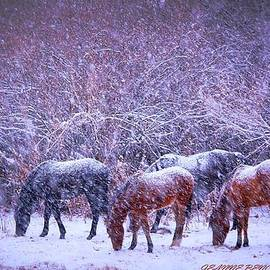 Jeanne  Bencich-Nations - Wild Horse Christams