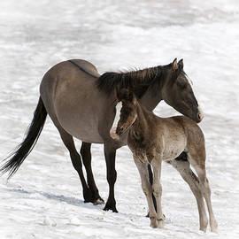 Wildlife Fine Art - Wild Horses-animals-image-16