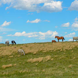 Wild Horses by Gales Of November