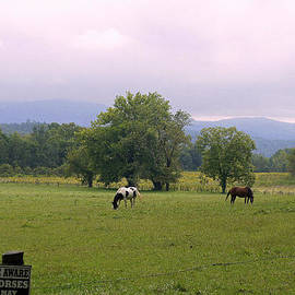 Laurie Perry - Wild Horses of Cades Cove