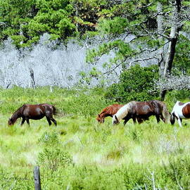 Bruce Brandli - Wild Ponies 3