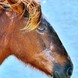 Kim Bemis - Wild Ponies of Assateague Series - 6