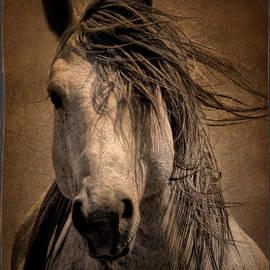 Tony Bruguiere - Wild Stallion