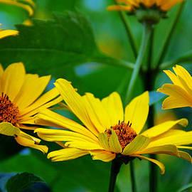 Debbie Oppermann - Wild Sunflowers