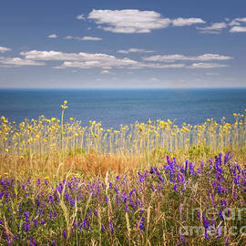 Wildflowers and ocean by Elena Elisseeva