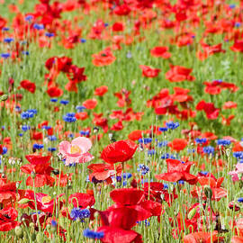Wildflowers by Larry Landolfi