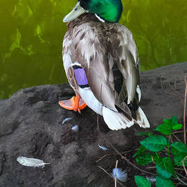 Charlie Cliques - Wildlife In Central Park