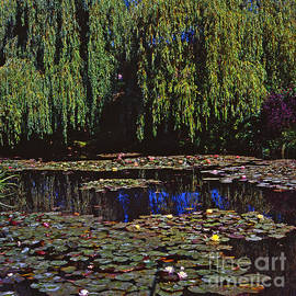 Alex Cassels - Willows and Water-Lilies