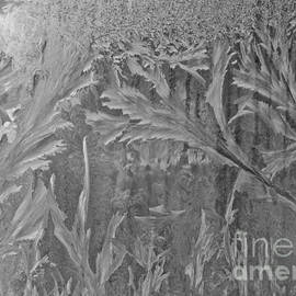 Cheryl Baxter - Window Frost in Black and White