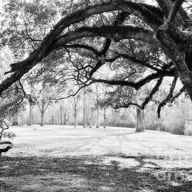 Window Oak - BW by Scott Pellegrin