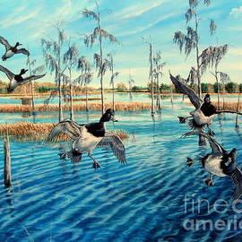 Lake Okeechobee - Ringed neck Ducks by Daniel Butler