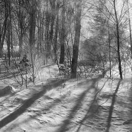Windy Winter BW by Karol Livote