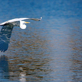Roy Williams - Wing Water Reflection