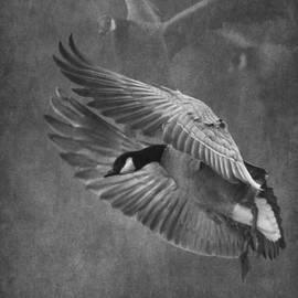 Angie Vogel - Winged Symphony