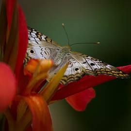 Wings of A Butterfly  by Saija  Lehtonen