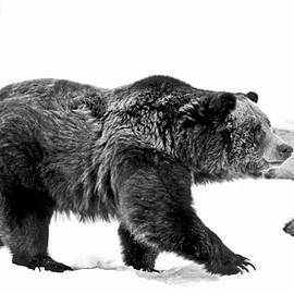 Athena Mckinzie - Winter Bear Walk Black and White
