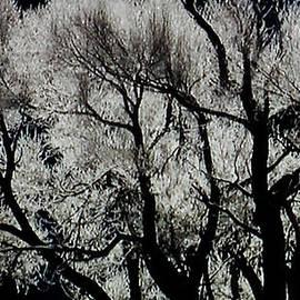 Winter Beauty by Colette V Hera  Guggenheim