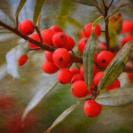 Linda Segerson - Winter Berries