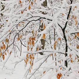 Ann Horn - Winter Branches