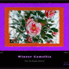 Joe Paradis - Winter Camellia