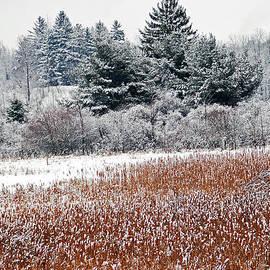 Aimee L Maher Photography and Art Visit ALMGallerydotcom - Winter Colors