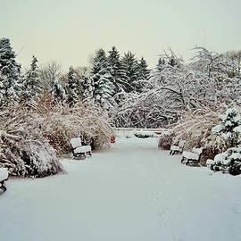 Vlad Costras - Winter Constrasts