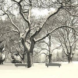 Brian Chase - Winter Delight