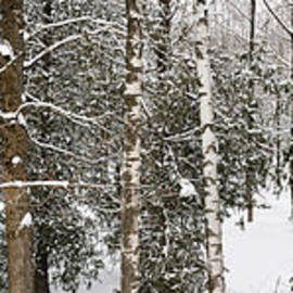 Winter forest landscape panorama by Elena Elisseeva