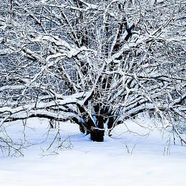 Alexander Senin - Winter Fresh
