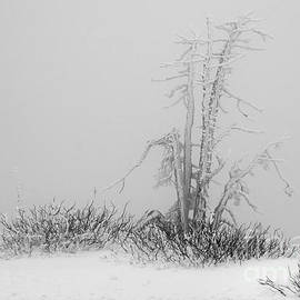 Inge Riis McDonald - Winter frost