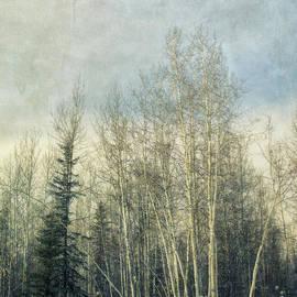 Priska Wettstein - Winter Grove