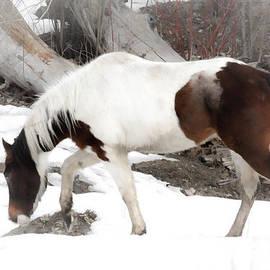 Athena Mckinzie - Winter Horse Trail