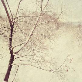 Jenny Rainbow - Winter Lace