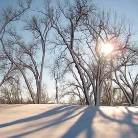 Alicia Knust - Winter Landscape