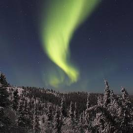 David Broome - Winter Light