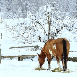 Frank Townsley - Winter mare