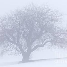 Alan L Graham - Winter Quiet