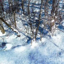 Claire Bull - Winter Shadows