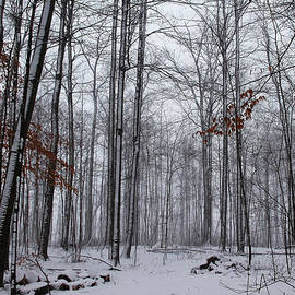 Debbie Oppermann - Winter Storm In The Forest