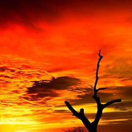 Ryan Dove - Winter Sunset