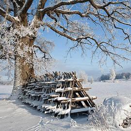 Evija Freidenfelde - Winter time