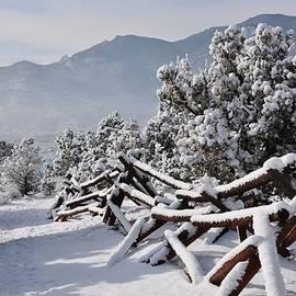 Diane Alexander - Winter Trail Beckons