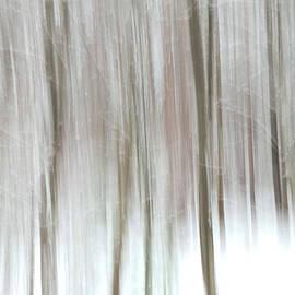 Winter Tree Abstract by Nancy De Flon