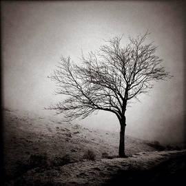 Dave Bowman - Winter Tree