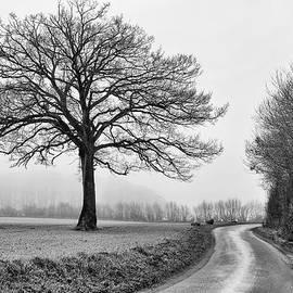 Winter Tree by Jurgen Lorenzen