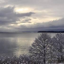 Cathy Mahnke - Winter Trees