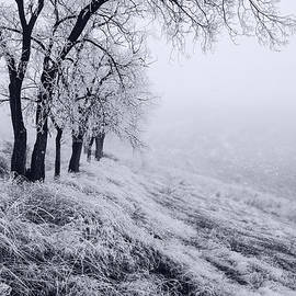 Vishwanath Bhat - Winter trees with frost in Idaho