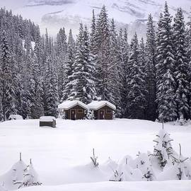 Forest Snow Blanketed Privies - Winter In Banff, Alberta by Ian Mcadie